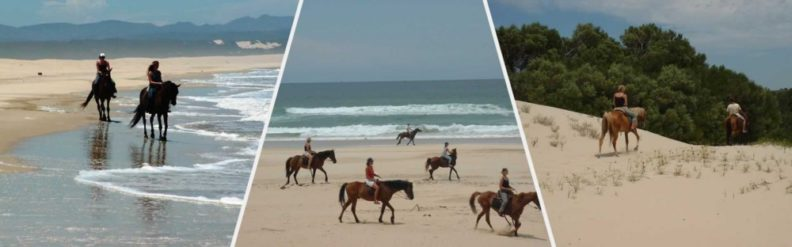 Beach Horse Trails at Papiesfontein