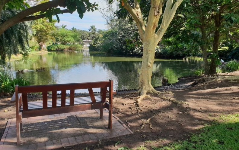 Pond and bench at Durban Botanic Gardens