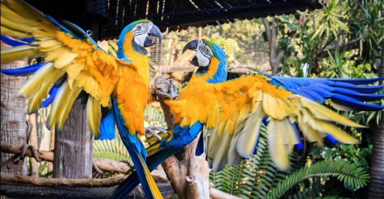 Two birds at Umgeni River Bird Park