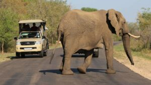 Things To Do in Kruger National Park